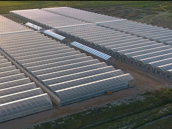 GREENHOUSES OF THRACE